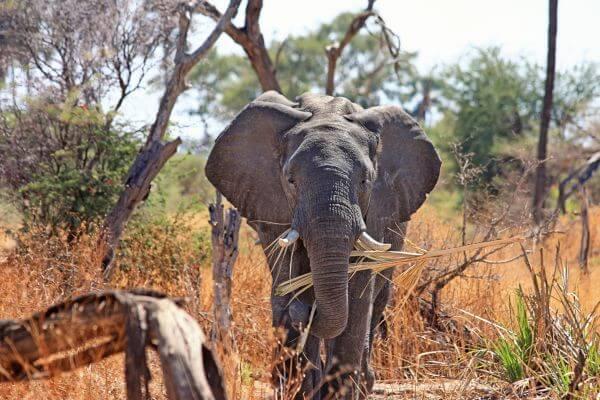 Africa photo