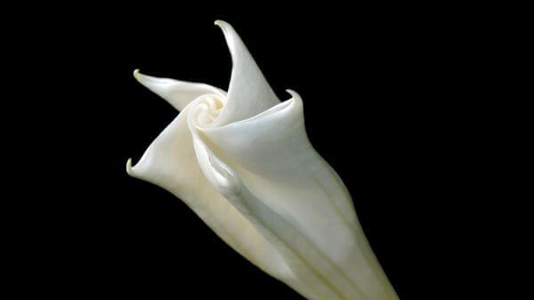 Blossom photo