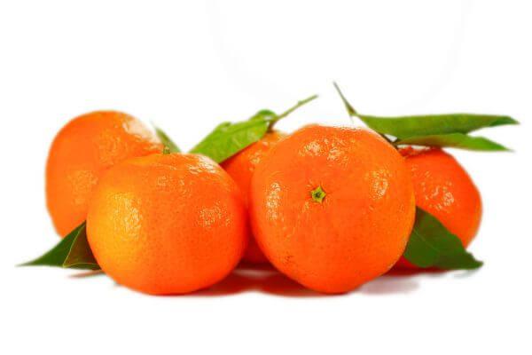 Citrus clementina photo