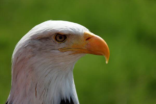 Adler photo