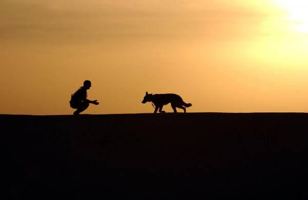 Canine photo