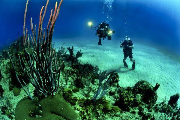 Corals photo