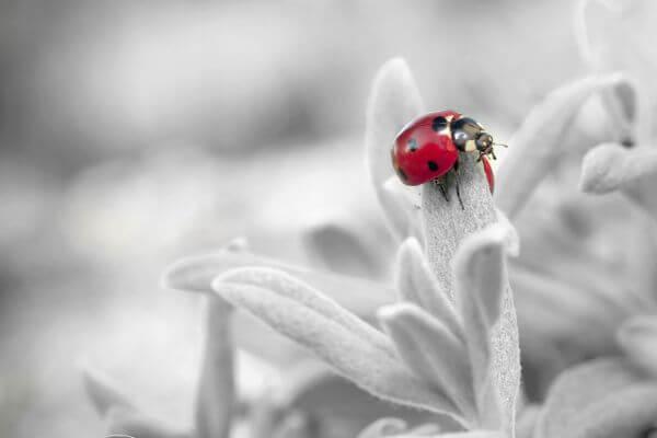 Beetle photo