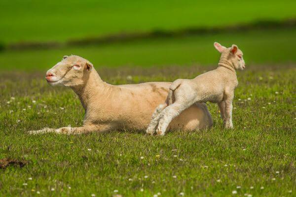 Animals photo