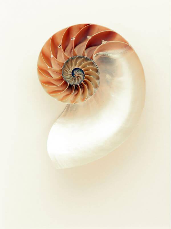 Mollusc photo