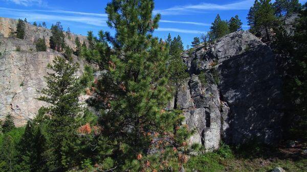 Cliffs  forest  fir trees video