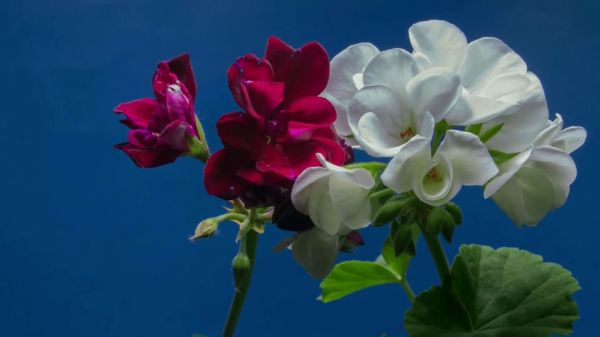 Flower  blossom  wildflowers