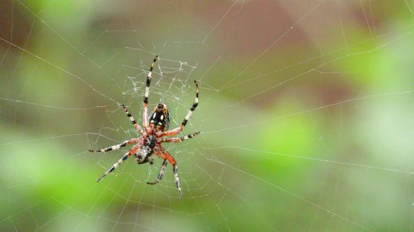 Spider  arachnid  food video