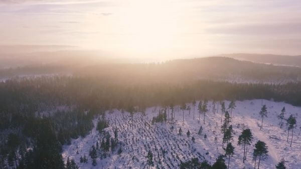 Forest  landscape  dawn video