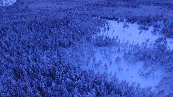 Winter  landscape  snow video