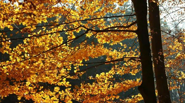 Autumn  tree  elbe sandstone mountains video
