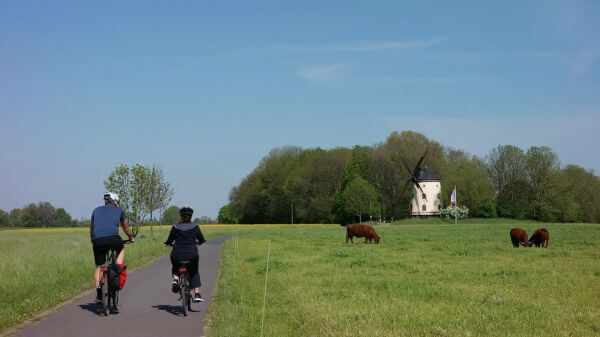 Cyclists  windmill  cows video