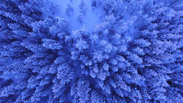 Snowy trees  above  winter video