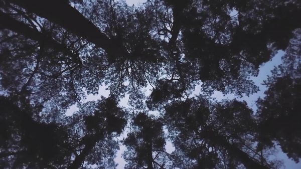 Forest  trees  clearing video