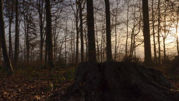Fog  trees  mood video