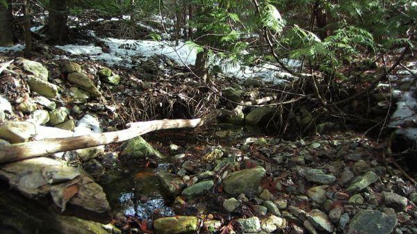 Nature  creek  plants video