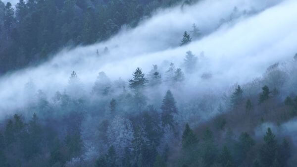 Nebellandschaft  wave of fog  fog video