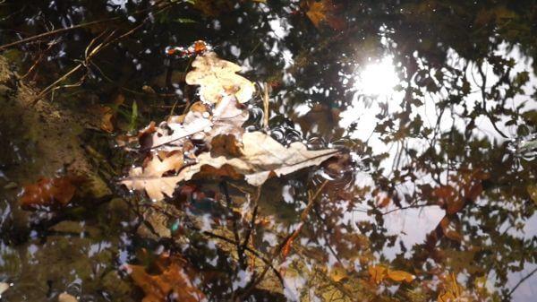 Water  pond  leaves video