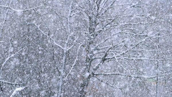 Snow  snowfall  snowflakes video