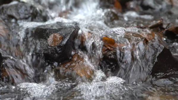 Water  forest  splash video