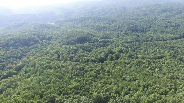 Forest  trees  aerial video