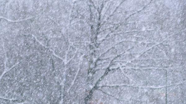 Snow flurry  snow  snowfall video