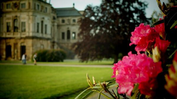Dresden  palais  large garden video
