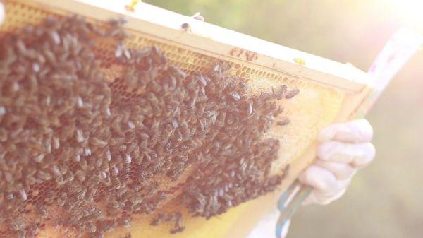 Bees  beekeeping  brood video