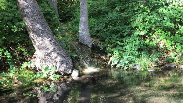 Creek  water  flowing video