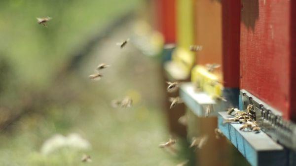 Apiary  beekeeping  bees video