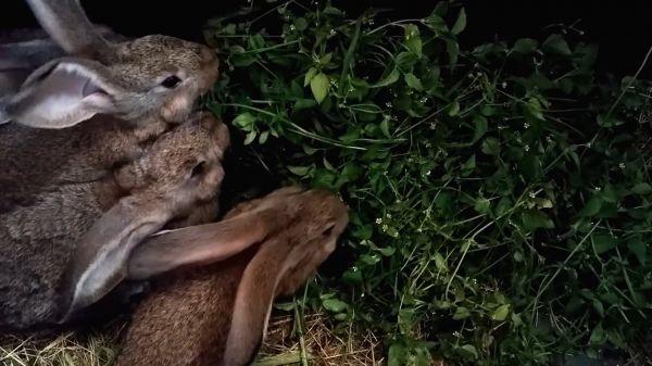 Rabbit  rabbits  animals video
