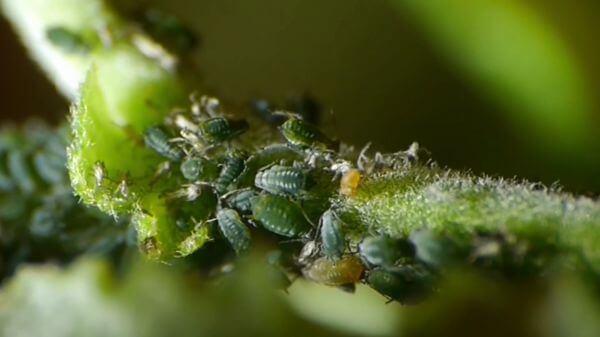 Hidden garden  insects  macro video