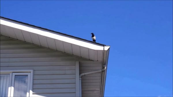 Bird  house  blue sky video
