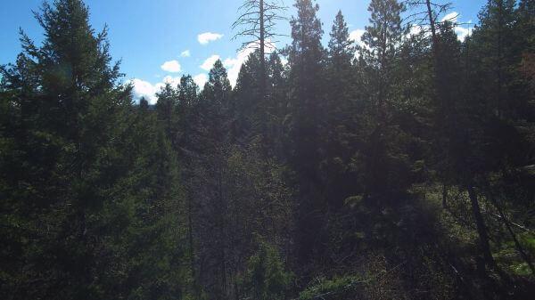 Okanagan  aerial  forest video
