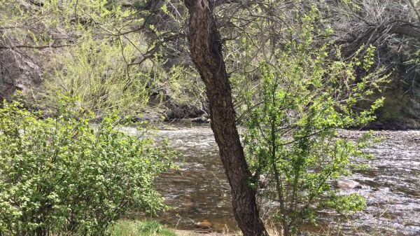 Colorado  poudre  river video