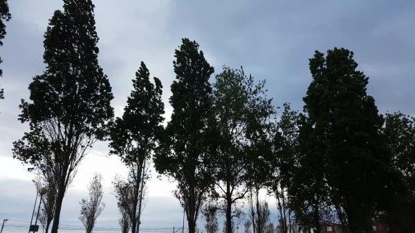 Tree  trees  trees movement video