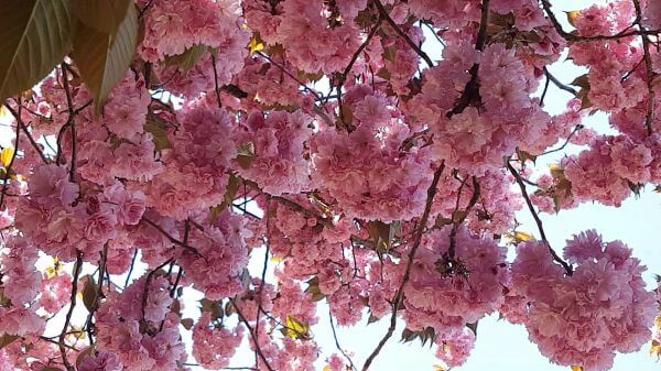 Flower tree  spring flowers  bright video