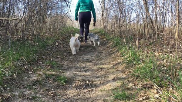 Walking the dog  pets  trail video