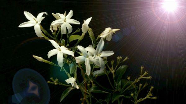 Wildflowers  plants  flower video