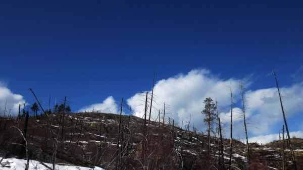 Okanagan  winter  forest fire video