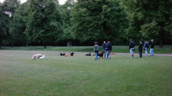 Dogs  dog training  animals video