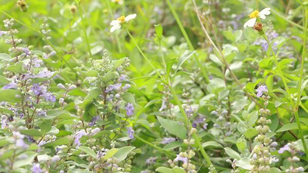 Flower  leaf  green plants video