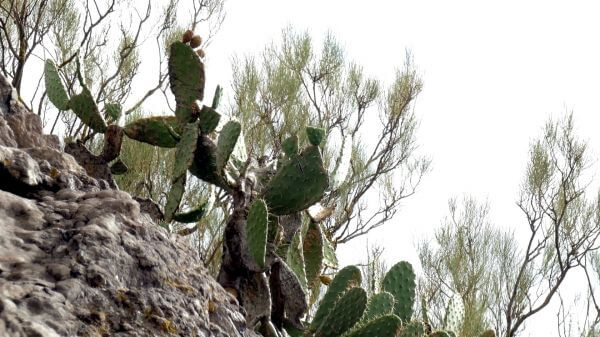 Cactus  rock  nature video