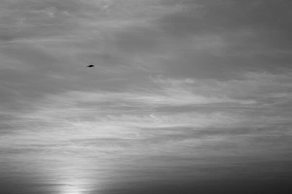 Bird Flying In Sky photo