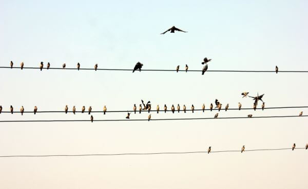Birds On Electric Wire photo