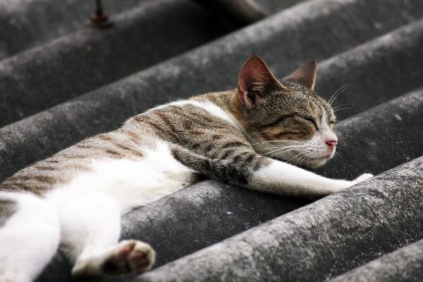 Cat Sleeping On Roof photo