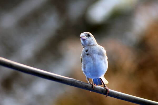 Cute Sparrow photo