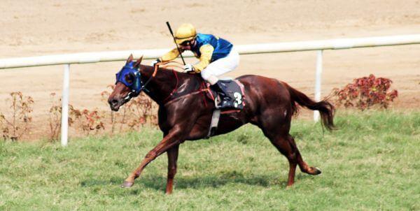 Horse Running Race photo