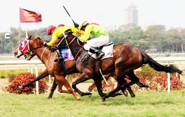 Horses In Action Running photo