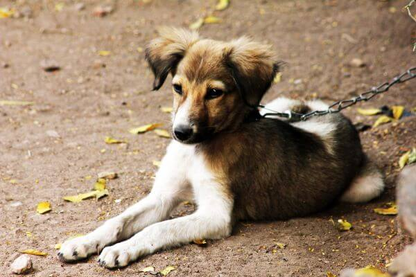 Pet Dog Sitting Ground Leash photo